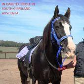 Uzdečka Endurance, polstrovaná Daretex