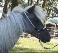 Ohlávka předváděcí pro Minihorse - růžová Daretex