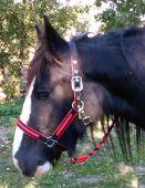 Ohlávka Linda s vodítkem - černá s červenou Daretex