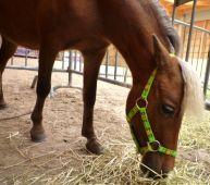 Ohlávka Minihorse, nastavitelná Daretex