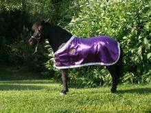 Deka pro minihorse, Výstavní Daretex