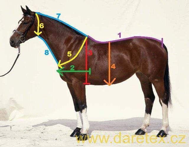 Jak vzít míry na deku pro koně Daretex